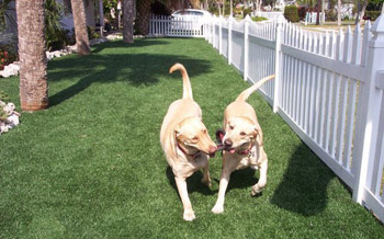 fake turf and artificial grass for pets