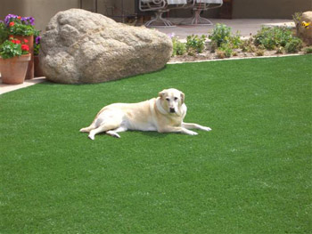 dog turf and artificial grass