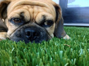 Pet Turf installations in Florida